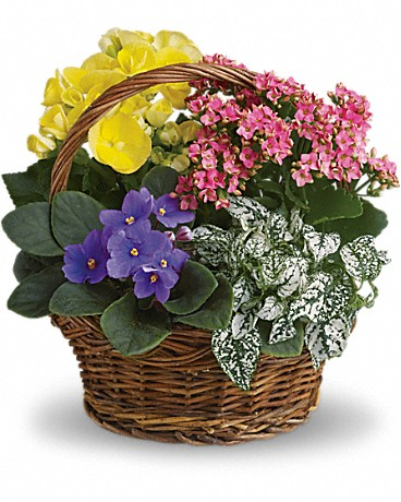 Basket, Flower basket, flowers, mother's day